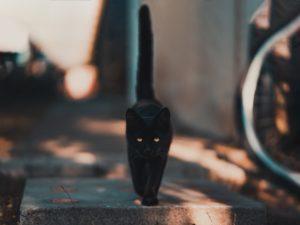 Gato negro, símbolo de mala suerte
