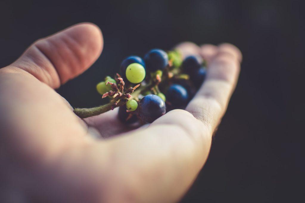 Mano sosteniendo unas uvas