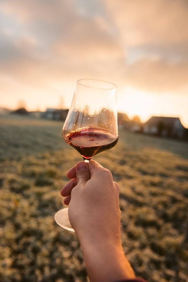 fase visual - catador de vinos